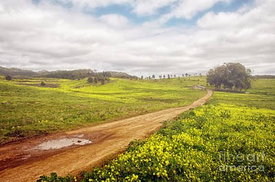 Dirt Roads Photograph - Spring Landscape by Carlos Caetano