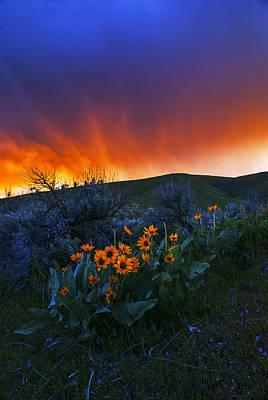 Photograph - Spring Landscape In Boise Idaho Usa by Vishwanath Bhat