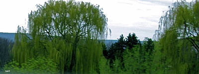 Natures Work Beautify Photograph - Spring Landscape Willows by Debra     Vatalaro
