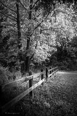 Oak Creek Photograph - Spring Leaves B/w by Marvin Spates