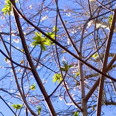 Sky Wall Art - Photograph - Spring Leaves #seasons #trees by Shari Warren