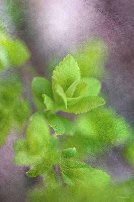 Photograph - Spring Leaves by WB Johnston