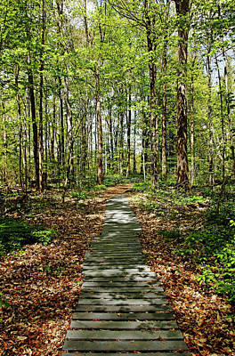Photograph - Spring Light And Shadow by Debbie Oppermann