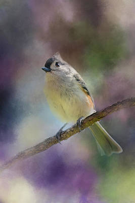 Tufted Titmouse Photograph - Spring Light In Her Eyes by Jai Johnson