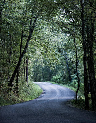 Photograph - Spring Light On A Forest Road by Parker Cunningham
