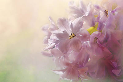 Hyacinths Wall Art - Photograph - Spring Light by Susan Capuano
