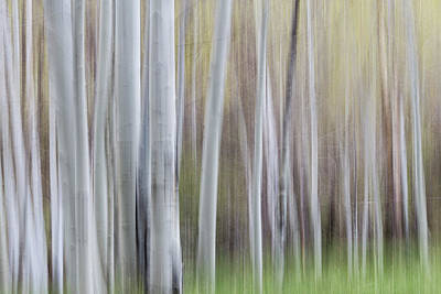 Photograph - Spring Light With Aspens by Deborah Hughes