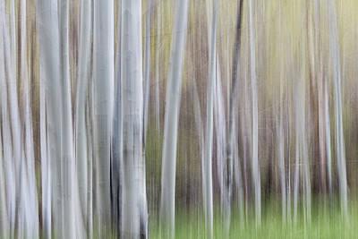 Photograph - Spring Light With Aspens by Deborah Hughes