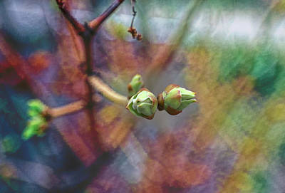 Photograph - Spring Lilac Buds by Aliceann Carlton