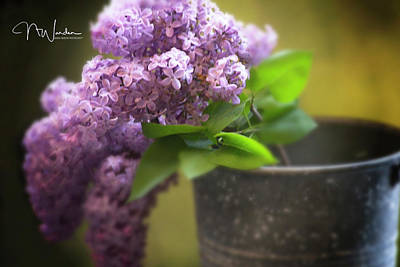 Photograph - Spring Lilacs by Norma Warden