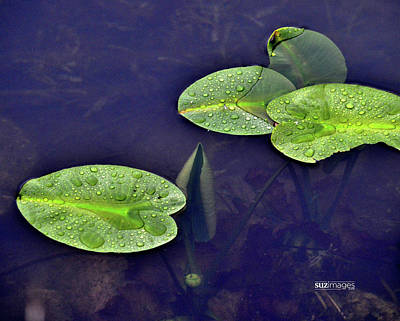 Photograph - Spring Lily Pads by Susie Loechler
