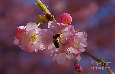 Art Print featuring the photograph Spring by Louise Fahy