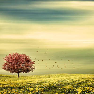 Cherry Tree Photograph - Spring by Lourry Legarde