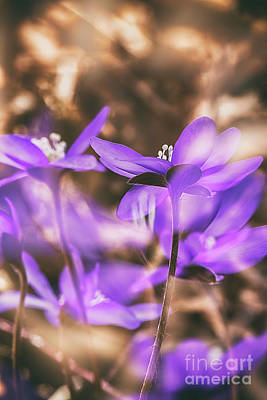 Abstract Flowers Royalty-Free and Rights-Managed Images - Spring magic 2 by Veikko Suikkanen