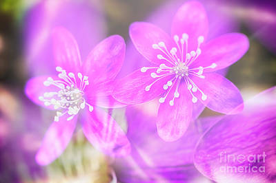 Abstract Flowers Royalty-Free and Rights-Managed Images - Spring magic 3 by Veikko Suikkanen
