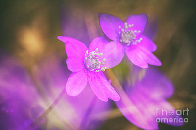 Abstract Flowers Royalty-Free and Rights-Managed Images - Spring magic 5 by Veikko Suikkanen