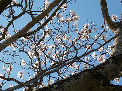 Photograph - Spring Magnolia by Matt Swann