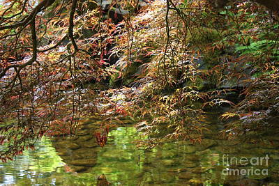 Photograph - Spring Maple Leaves Over Japanese Garden Pond by Carol Groenen