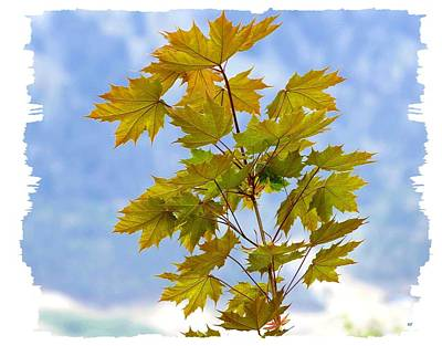 Photograph - Spring Maple Leaves by Will Borden