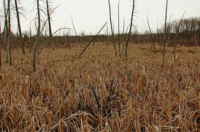 Photograph - Spring Marsh Valens by Debbie Oppermann
