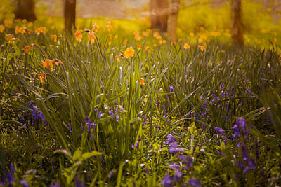 Daffodils Photograph - Spring Meadow by Chris Fletcher