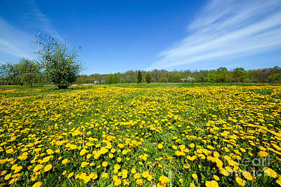 Angle Photograph - Spring Meadow Full Of Dandelions Flowers And Green Grass by Michal Bednarek