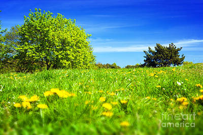 Fields Photograph - Spring Meadow With Green Grass by Michal Bednarek
