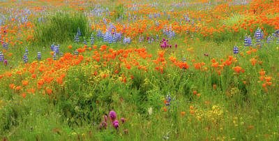 Photograph - Spring Medley by Lynn Bauer