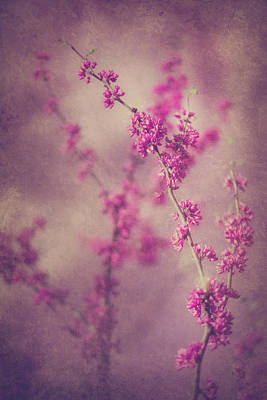 Photograph - Spring Melody by Elvira Pinkhas