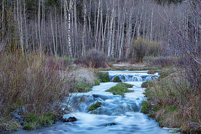 Spring Melt Off Flowing Down From Bonanza Art Print by James BO Insogna