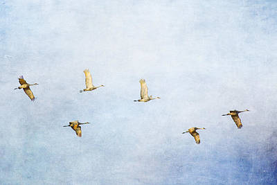 Photograph - Spring Migration 3 - Textured by Kathy Adams Clark