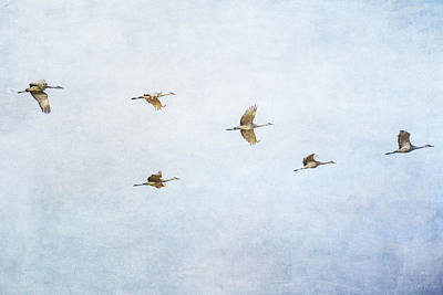 Photograph - Spring Migration 4 - Textured by Kathy Adams Clark