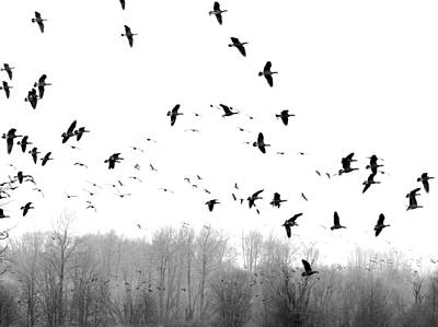 Photograph - Spring Migration Bw by I'ina Van Lawick