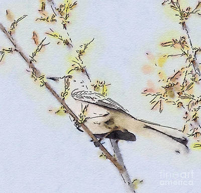 Photograph - Spring Mockingbird - Watercolor Art by Kerri Farley