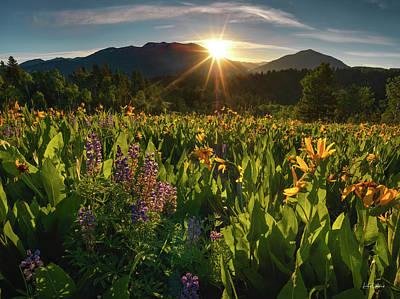 Photograph - Spring Morning by Leland D Howard