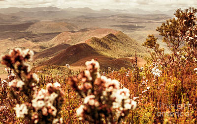 Floral Landscape Photograph - Spring Mountain Blossoms by Jorgo Photography - Wall Art Gallery