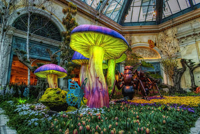 Hdr Photograph - Spring Mushrooms by Stephen Campbell