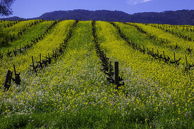 Spring Mustard Field Art Print by Garry Gay