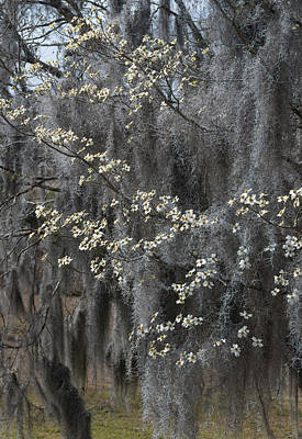 Photograph - Spring Mystery by Suzanne Gaff