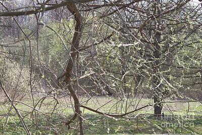 Photograph - Spring Net by Anna Yurasovsky
