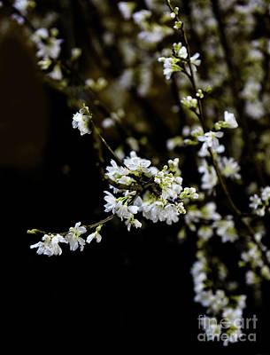 Photograph - Spring by Nicki McManus