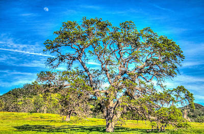 Photograph - Spring Oak Moon Rise by Connie Cooper-Edwards