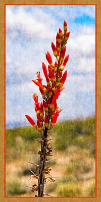 Photograph - Spring Ocotillo Buds by Bonnie Follett