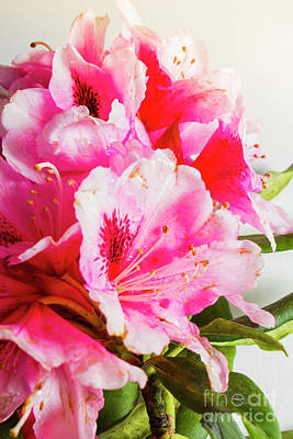 Spring Of Flower Bouquets Art Print