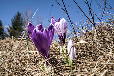 Photograph - Spring On Bule by Nick Mares