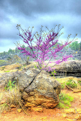 Photograph - Spring On Devils Den by Paul W Faust - Impressions of Light