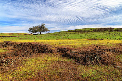 Photograph - Spring On North Table Mountain by James Eddy
