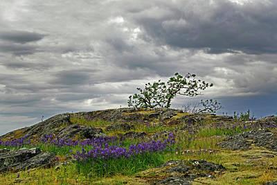 Photograph - Spring On Shack Island by Inge Riis McDonald