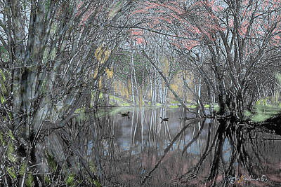 Spring On The Backwater Art Print