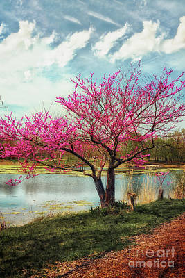 Photograph - Spring On The Lake by Graesen Arnoff